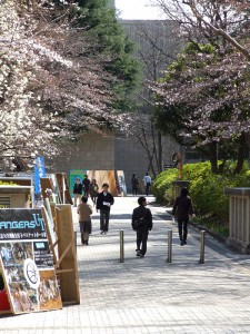 春の駒場キャンパス